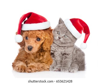 Poodle puppy and tiny kitten in red christmas hats. isolated on white background