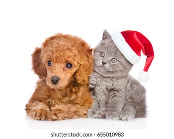 Poodle puppy and tiny kitten in red christmas hat. isolated on white background