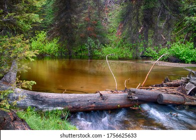 Pool in the forest created by aged cut logs
