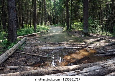 Pool and logs on the dirt road in the forest