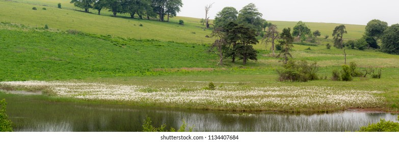 Pool at Priddy Mineries, in Somerset, UK. Cottongrass shows white on the bank of the lake in this spent lead mine, now a fabulous place for wildlife