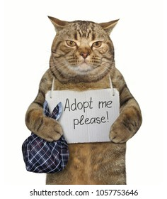 """The poor cat with a sign around his neck. It says """" Adopt me please! """" White background."""