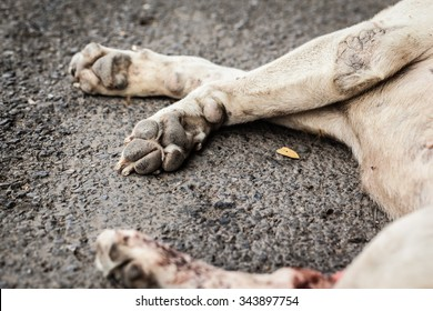 a poor diseased thai stray dog dying on the side of the road maybe after being run over