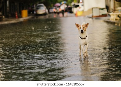 Poor Dog In The Flooded City