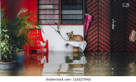 Poor dog no where to go when flooding