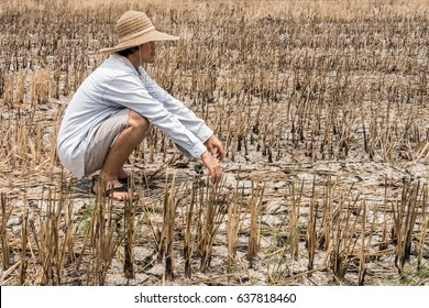Poor farmer in a rice field during the long drought. Because of the lack of water in agricultural area.