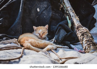 Poor homeless cat is laying on rigging