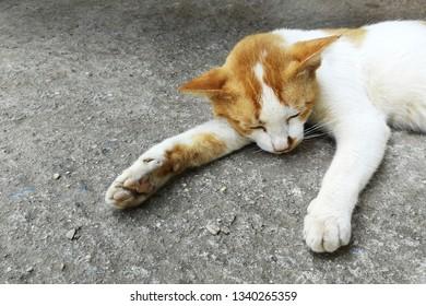 poor homeless cat sleep on dirty ground
