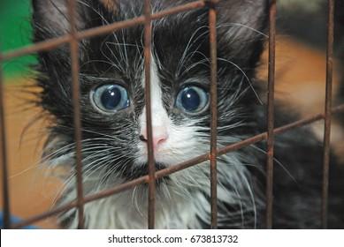 the poor homeless kitten at the shelter