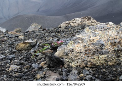 poor living condition on  Iceland