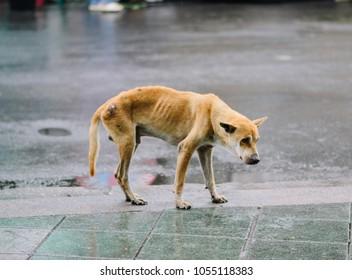 poor skinny dog