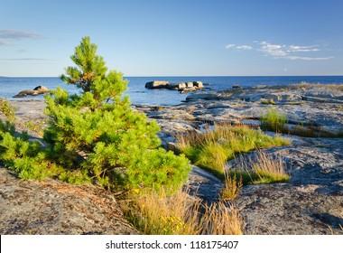 Poor vegetation on Swedish rocky coast