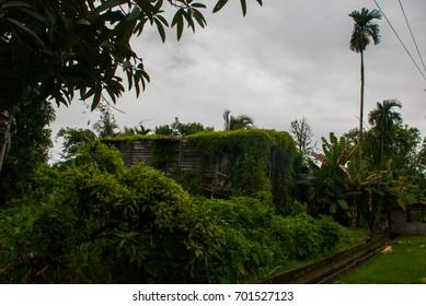 Poor wooden House overgrown with green plants city Bintulu, Borneo, Sarawak, Malaysia.
