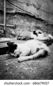 poorly street cats slept on the floor