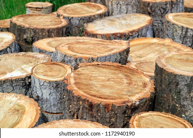 poplar cuttings and cut into pieces, it is necessary to chop wood