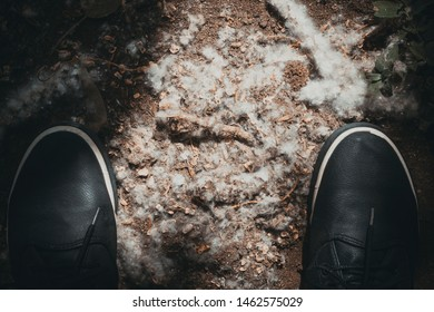poplar fluff like white cotton wool lying on the ground under your feet, is the strongest and most dangerous allergen; health hazard concept.