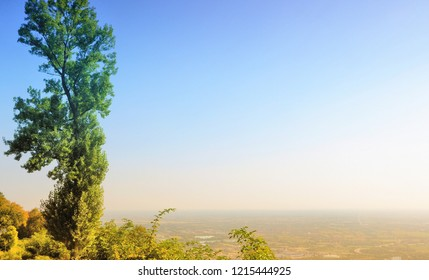 Poplar plant with horizon and copy space.