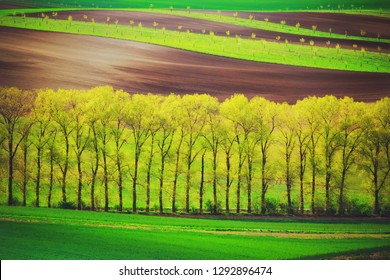 Poplar trees alley and sunset lines and waves in the spring, South Moravia, Czech Republic
