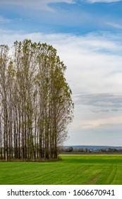 Poplar trees in row, Bulgarian late autumn green field near Zlato Pole village, Municipality of Dimitrovgrad, Haskovo province, Bulgaria, Europe. Amazing scenery landscape, beautiful sky - Shutterstock ID 1606670941