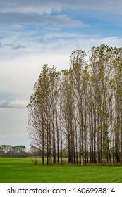 Poplar trees in row, Bulgarian late autumn green field near Zlato Pole village, Municipality of Dimitrovgrad, Haskovo province, Bulgaria, Europe. Amazing scenery landscape, beautiful sky - Shutterstock ID 1606998814