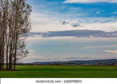 Poplar trees in row, Bulgarian late autumn green field near Zlato Pole village, Municipality of Dimitrovgrad, Haskovo province, Bulgaria, Europe. Amazing scenery landscape, beautiful sky - Shutterstock ID 1606998823