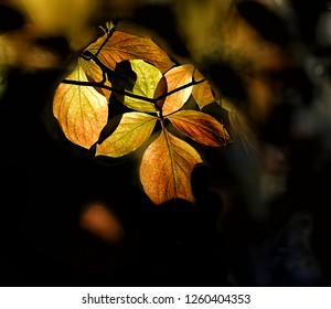 poplars shimmer in the morning glow of yosemite