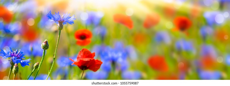 poppies and cornflowers in summertime