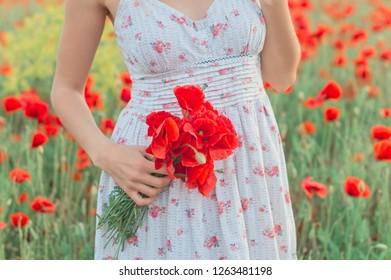poppies in female hands, poppy field
