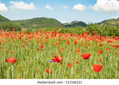 poppies and hills