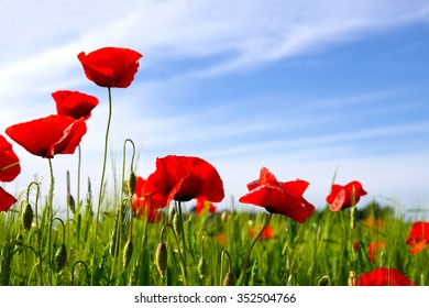 Poppies on blue sky background