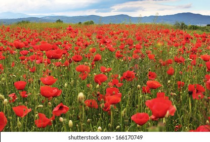 Poppies on mountain meadow