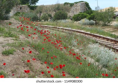 Poppies on the rails