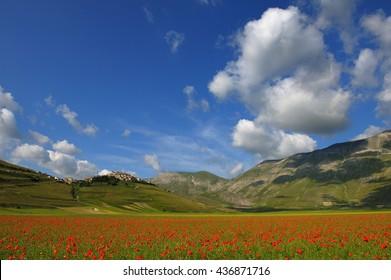 poppies in Piano Grande castelluccio di Norcia