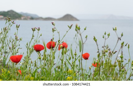 Poppies with the sea and mountains at the background