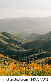 Poppies with view of green hills and mountains at Walker Canyon, in Lake Elsinore, California