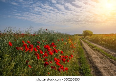 poppy field in bloom in late spring with a country road