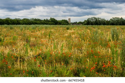Poppy Field with church