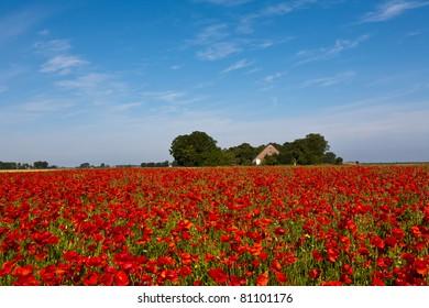 Poppy Field and Farm with a Blue Sky