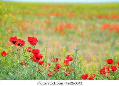 poppy field with mountain