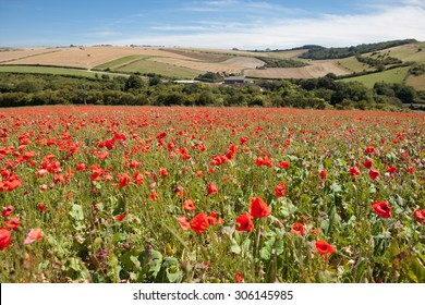 Poppy field with the view of South Downs way, East Sussex, England, selective focus