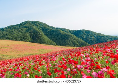 the poppy fields in chichibu,saitama