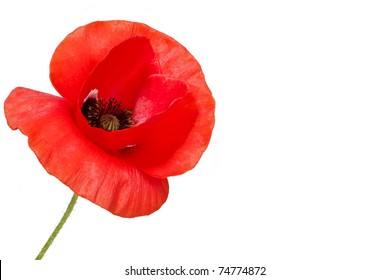 Poppy flower images stock photos vectors shutterstock poppy flower mightylinksfo