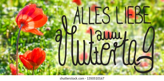 Poppy Flower, Spring, Calligraphy Muttertag Means Happy Mothers Day