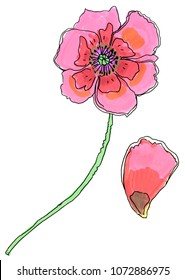 Poppy flower. Wedding flowers bundle. Flower collection of watercolor detailed hand drawn poppies.
