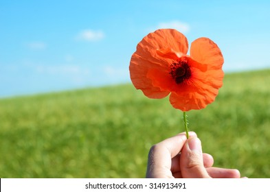 "Poppy flower with the words ""Remembrance day. Lest we forget"