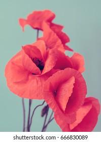 poppy flowers bouquet
