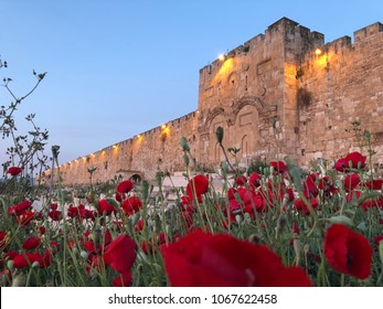 Poppy flowers in front of the Golden Gate of the Old City, Jerusalem