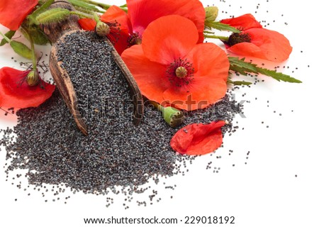 Poppy flowers poppy seeds wooden scoop stock photo edit now poppy flowers and poppy seeds in wooden scoop isolated on white background mightylinksfo