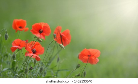 Poppy flowers with sun as a banner