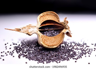 Poppy seed head cross section with poppy seeds inside on a white table background with poppy seeds spilled.